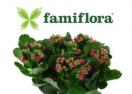 famiflora.be